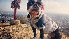 Dog-friendly Runyon Canyon